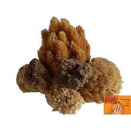 Mořská houba pro dekorativní malbu