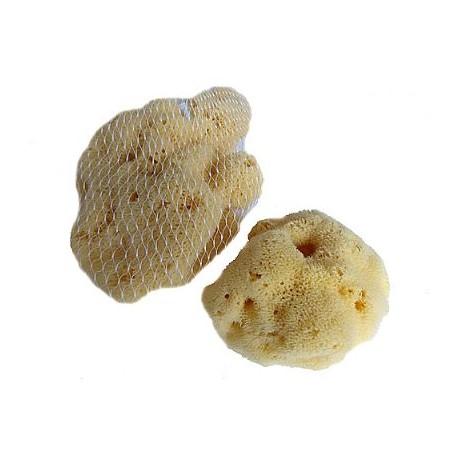 přírodní jaderská houba